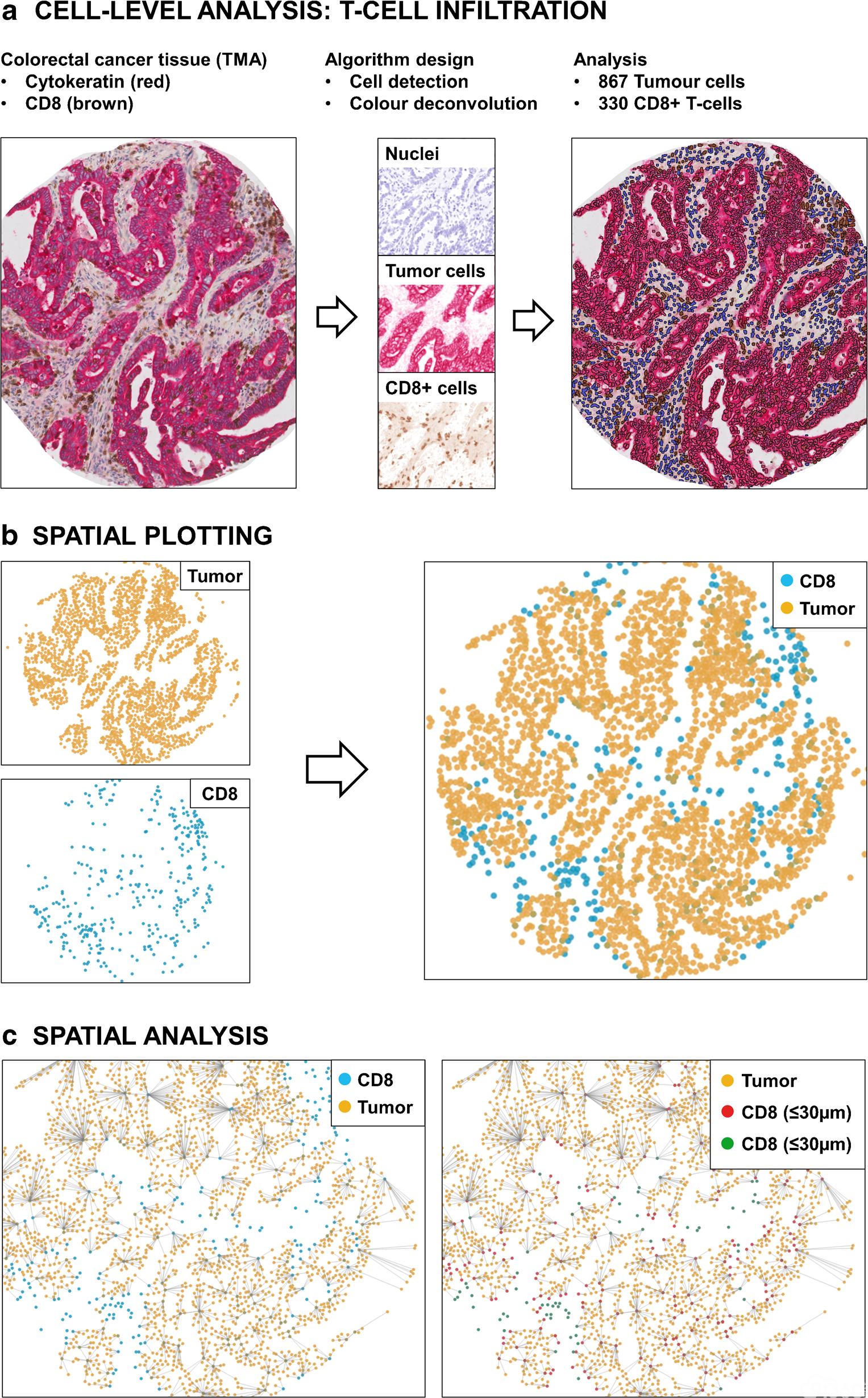 应用图像分析和人工智能进行精准免疫分析