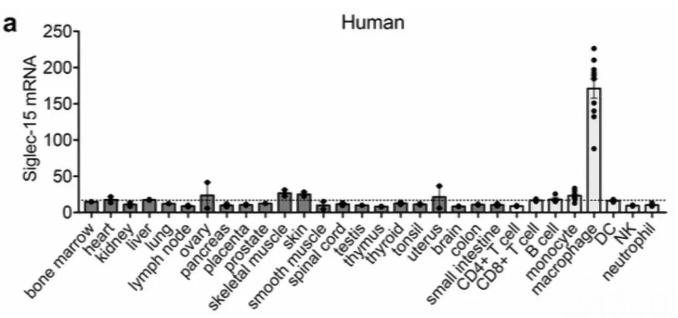 图2:Siglec-15在人类组织细胞的mRNA水平分布
