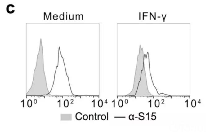 图3:IFN-γ处理后,RAW264.7巨噬细胞系Siglec-15表达下降。