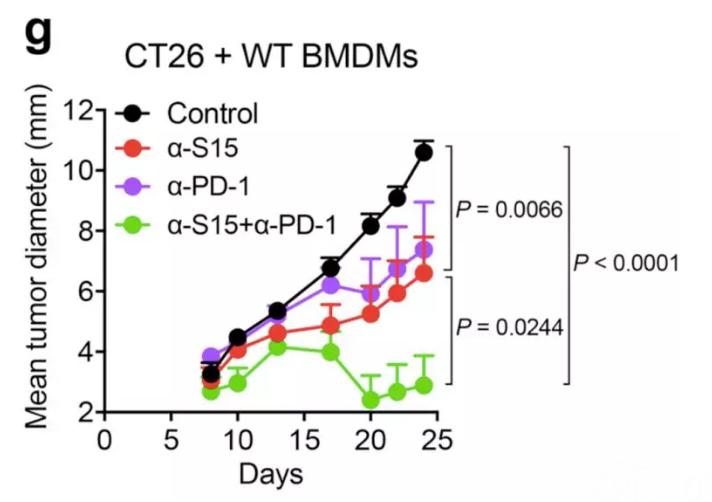 图7:α-S15和抗PD-1单克隆抗体对肿瘤生长的影响