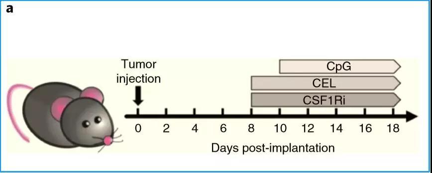癌症治疗重大发现