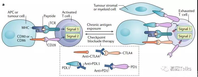 免疫治疗丨一文尽揽『免疫检查点抑制剂所有相关生物标志物』的应用前景