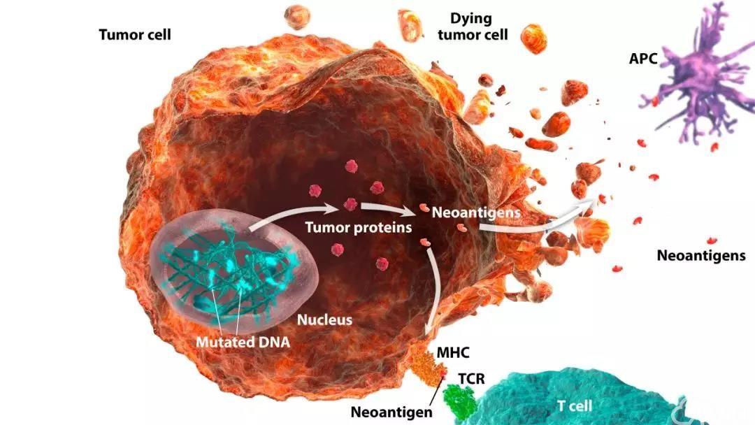 肿瘤突变负荷(TMB)分为高和低两类