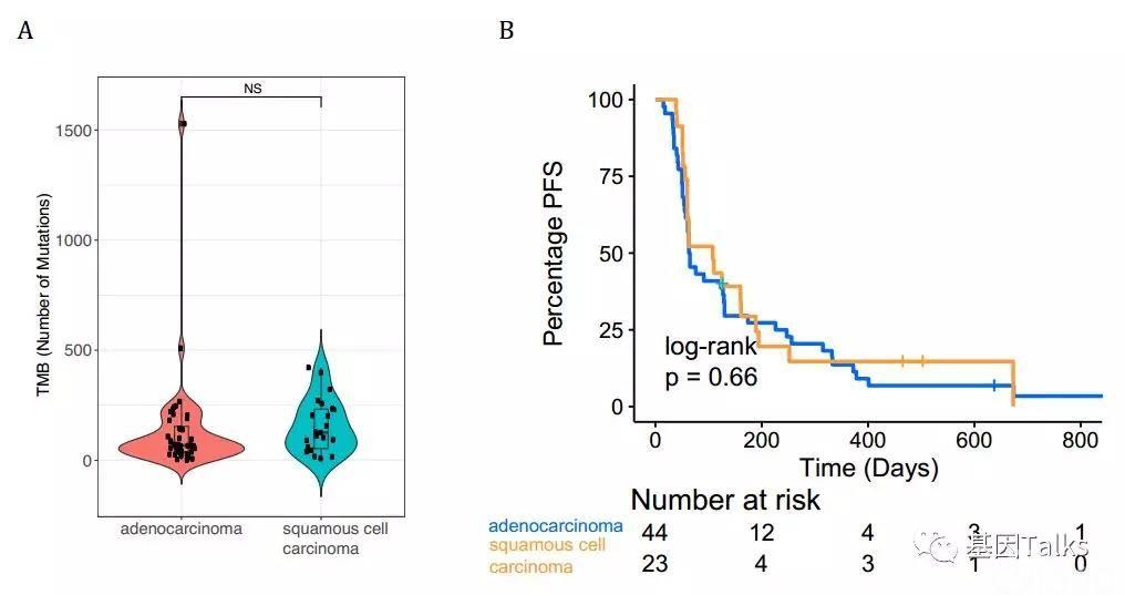 免疫治疗丨NGS大panel检测发现中国肺癌患者对PD-(L)1应答的新型分子标志物!
