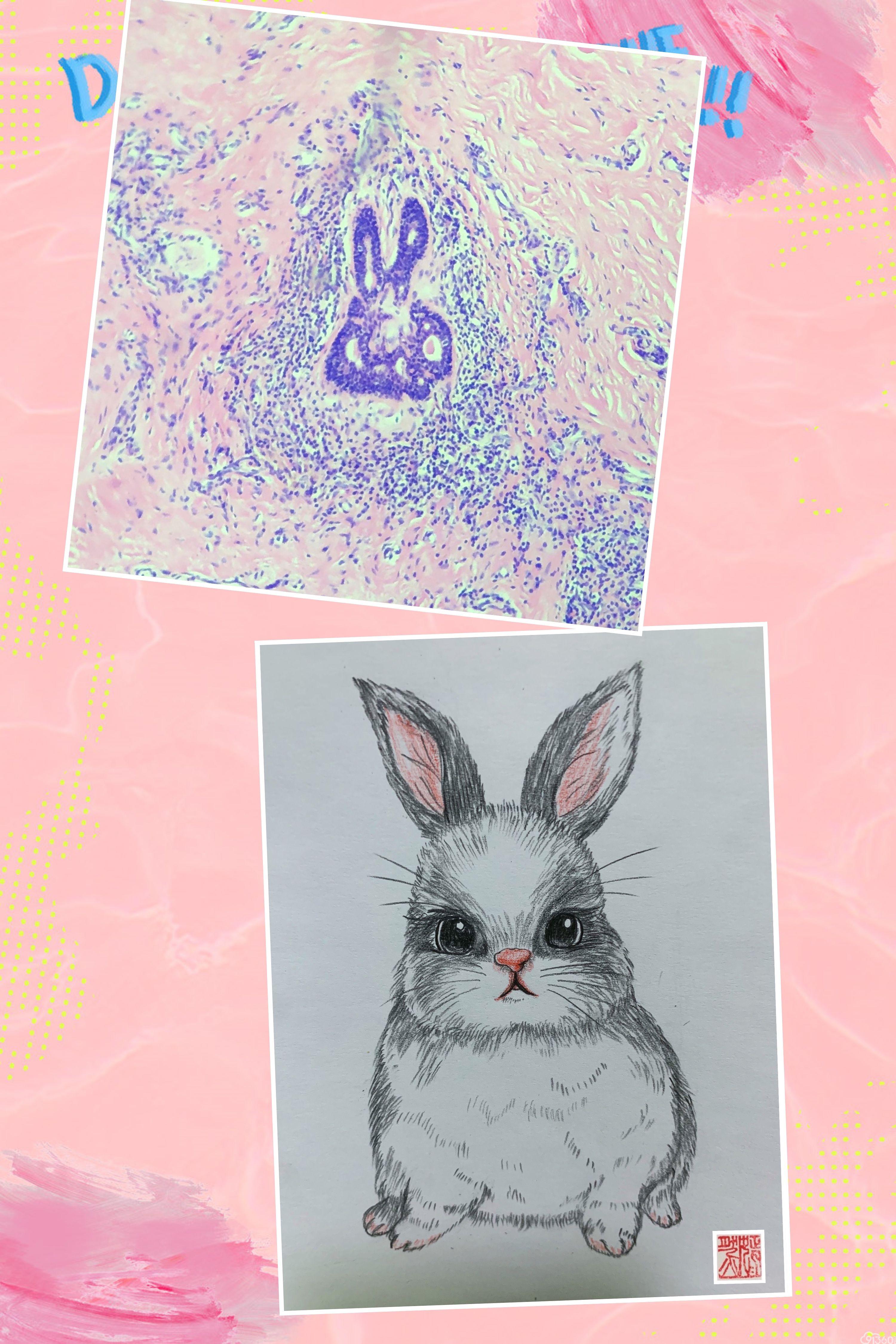 手绘病理世界——《兔乖乖》