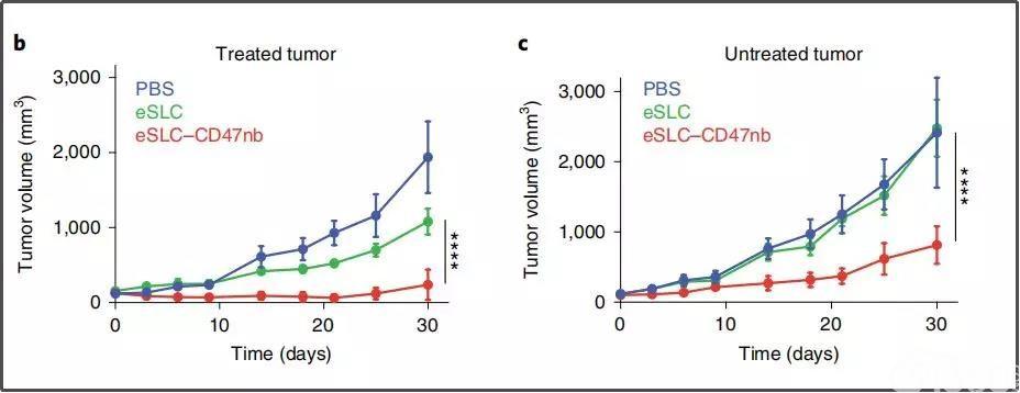 """免疫治疗新方向!《自然》子刊重磅:肿瘤完全、持续消退,""""溶瘤细菌""""远隔效应瞩目!"""