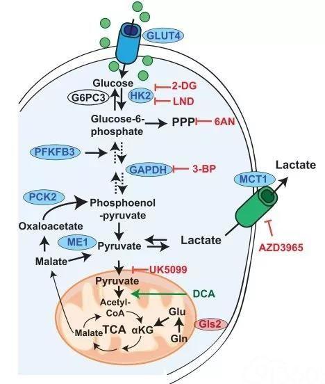 《细胞》双重磅:揭秘维生素E促肺癌转移机制!科学家发现抗氧化剂能增强癌细胞利用葡萄糖的能力,促进癌症转移丨科学大发现