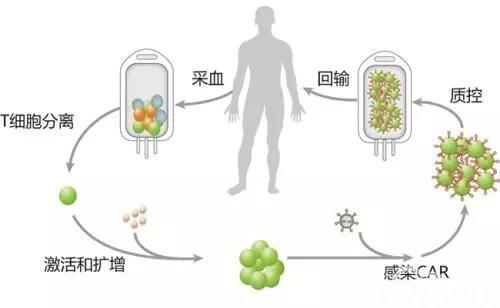 Science子刊:给CAR-T加上开关,有效防止细胞因子风暴,且不影响抗癌效果