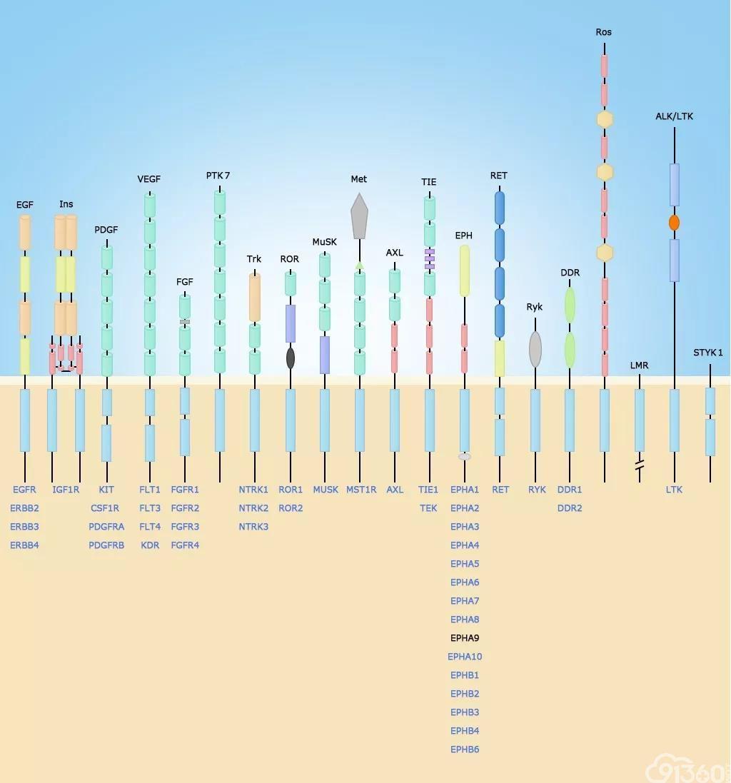 综述:NTRK融合阳性实体瘤患者的序贯治疗